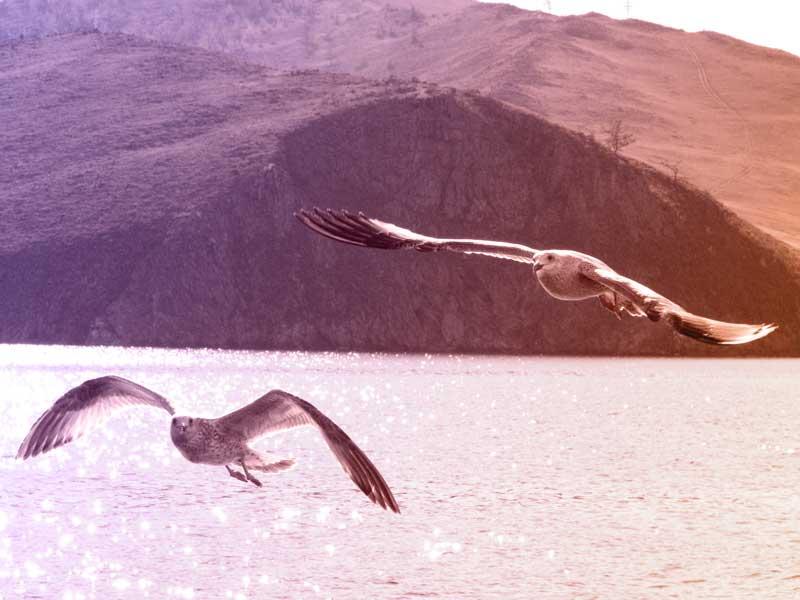 Möwen über dem Baikalsee